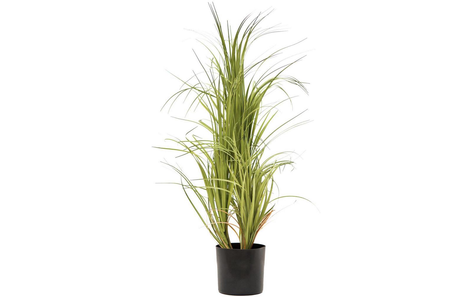 europalms-dracenabusch-mit-schwarzen-topf-80cm-kunststoffpflanze