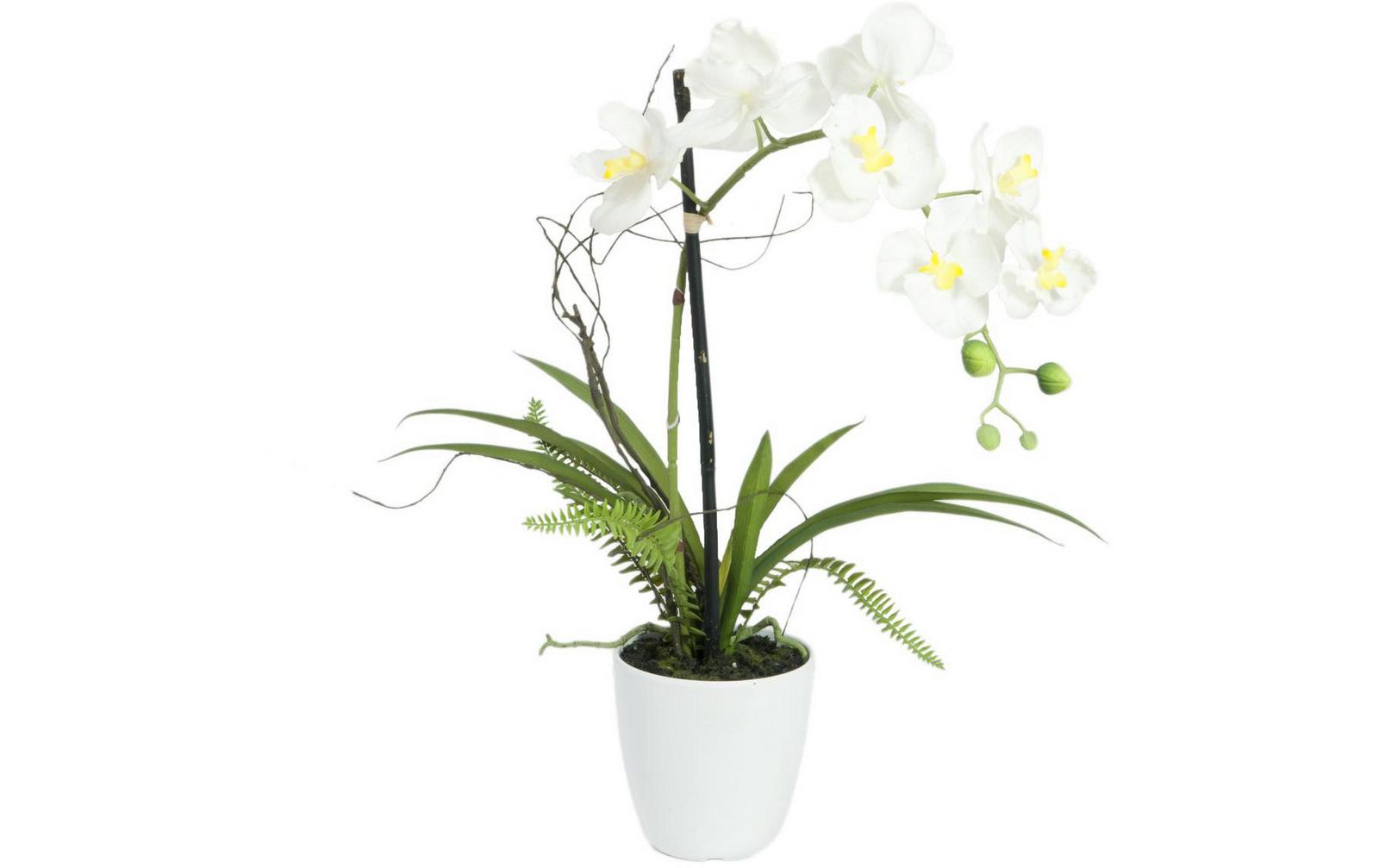 europalms-orchideen-arrangement-1-kunststoffpflanze