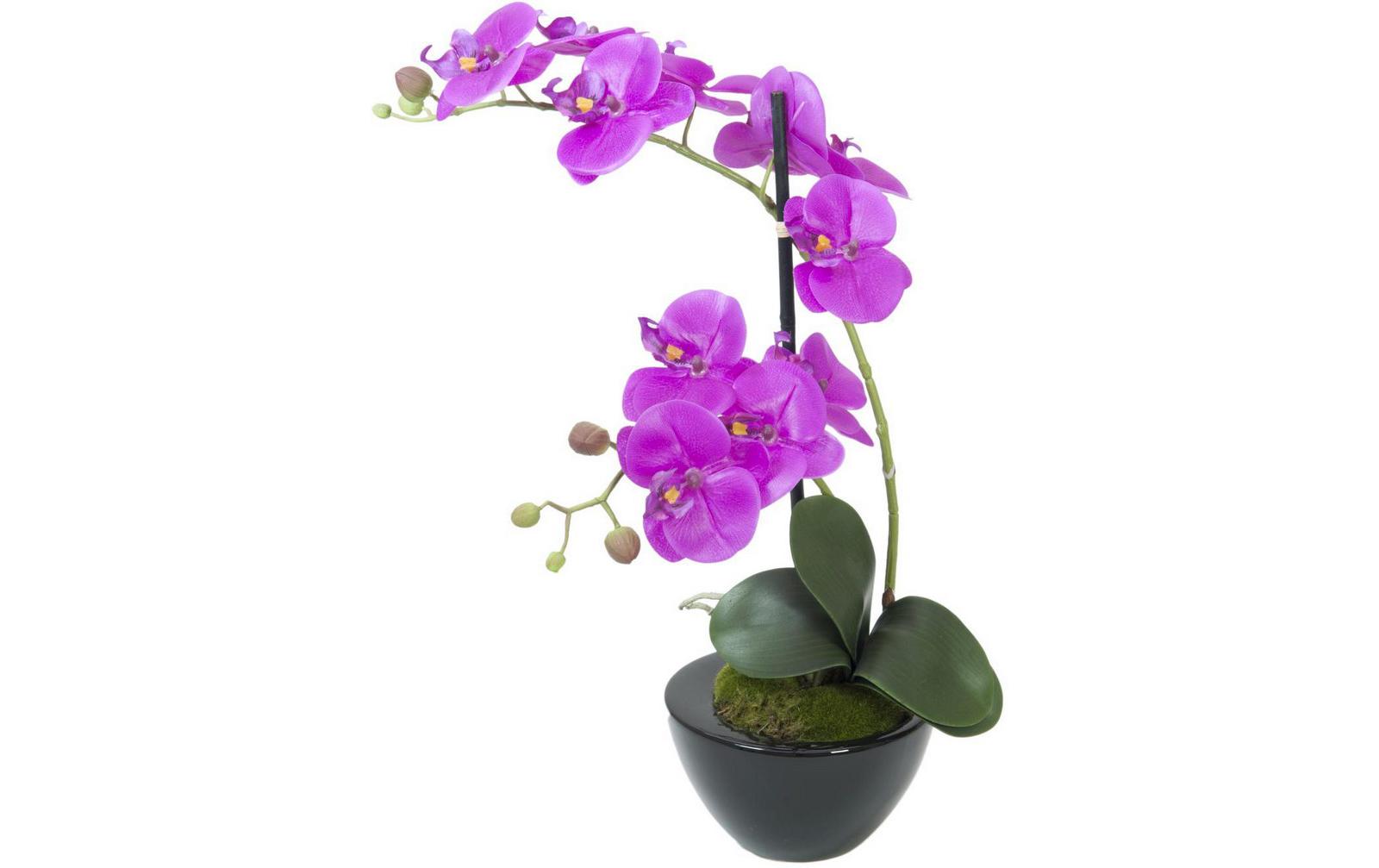 europalms-orchideen-arrangement-4-kunststoffpflanze