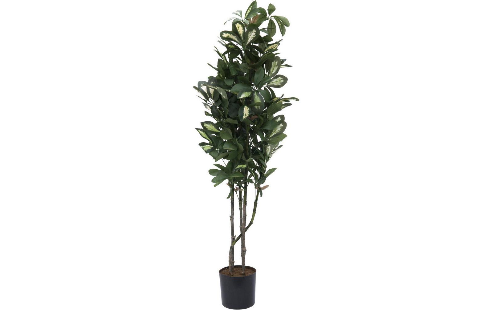 europalms-schefflera-120cm-kunststoffpflanze