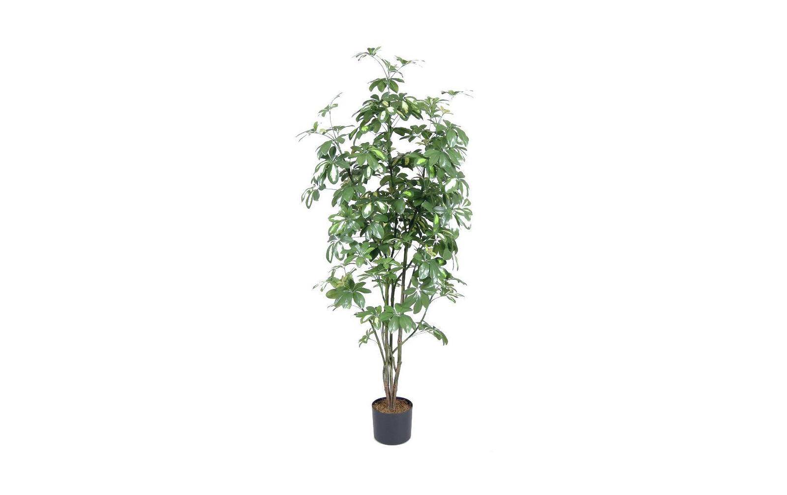 europalms-schefflera-150cm-kunststoffpflanze