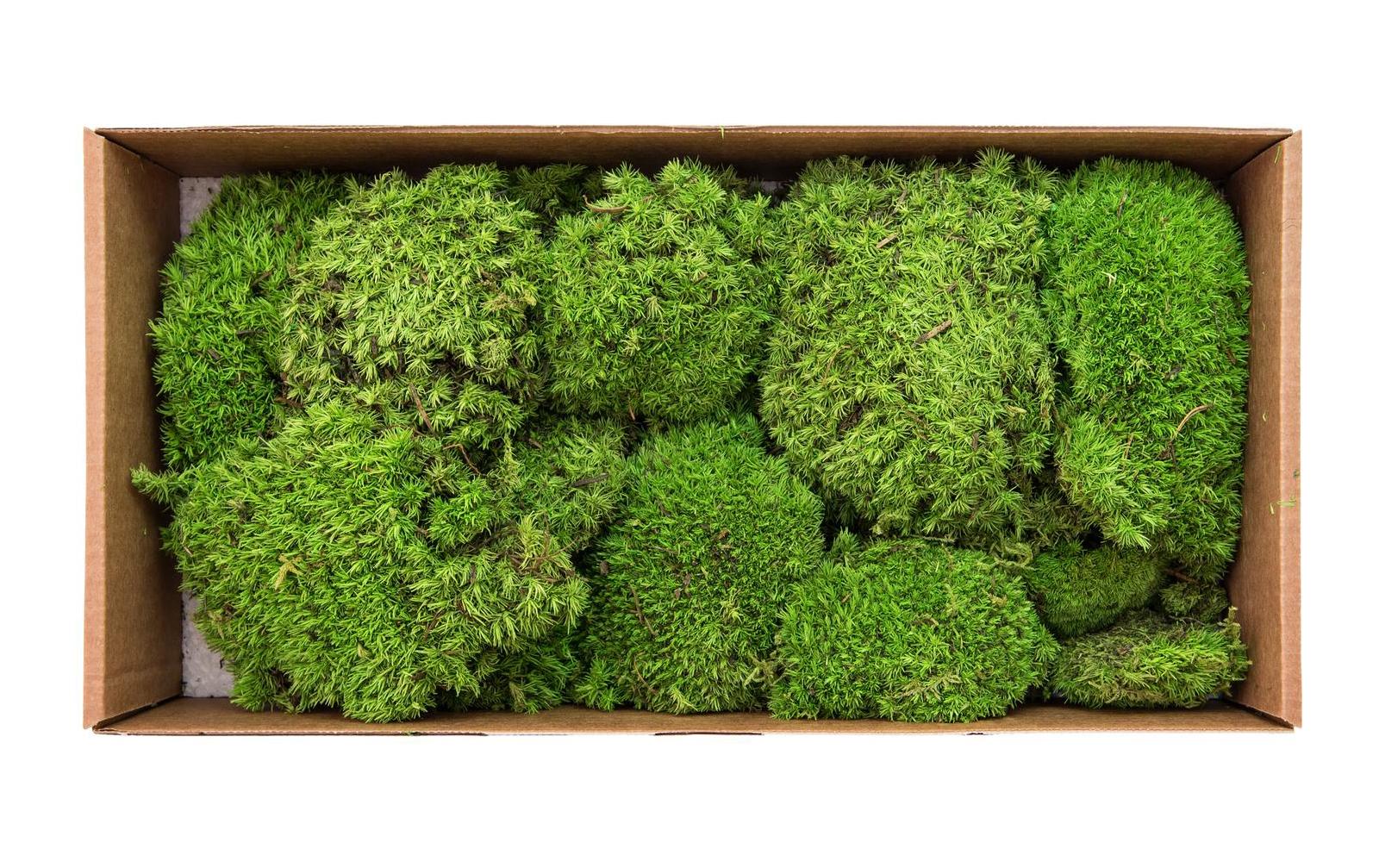 europalms-moosflecken-apfelgra-n-pra-pariert-10x-kunststoffpflanze
