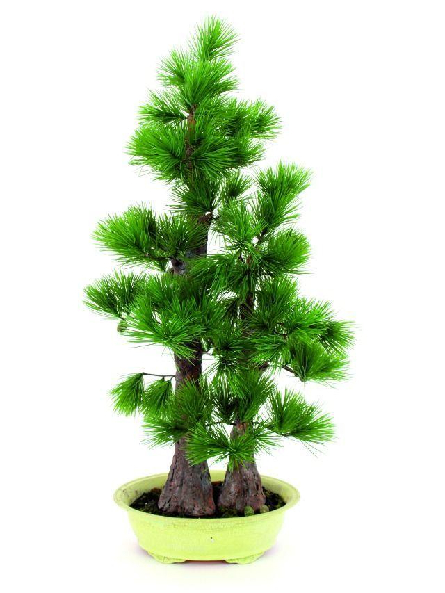 europalms bonsai pinie 493 bl tter kunstoff g nstig. Black Bedroom Furniture Sets. Home Design Ideas