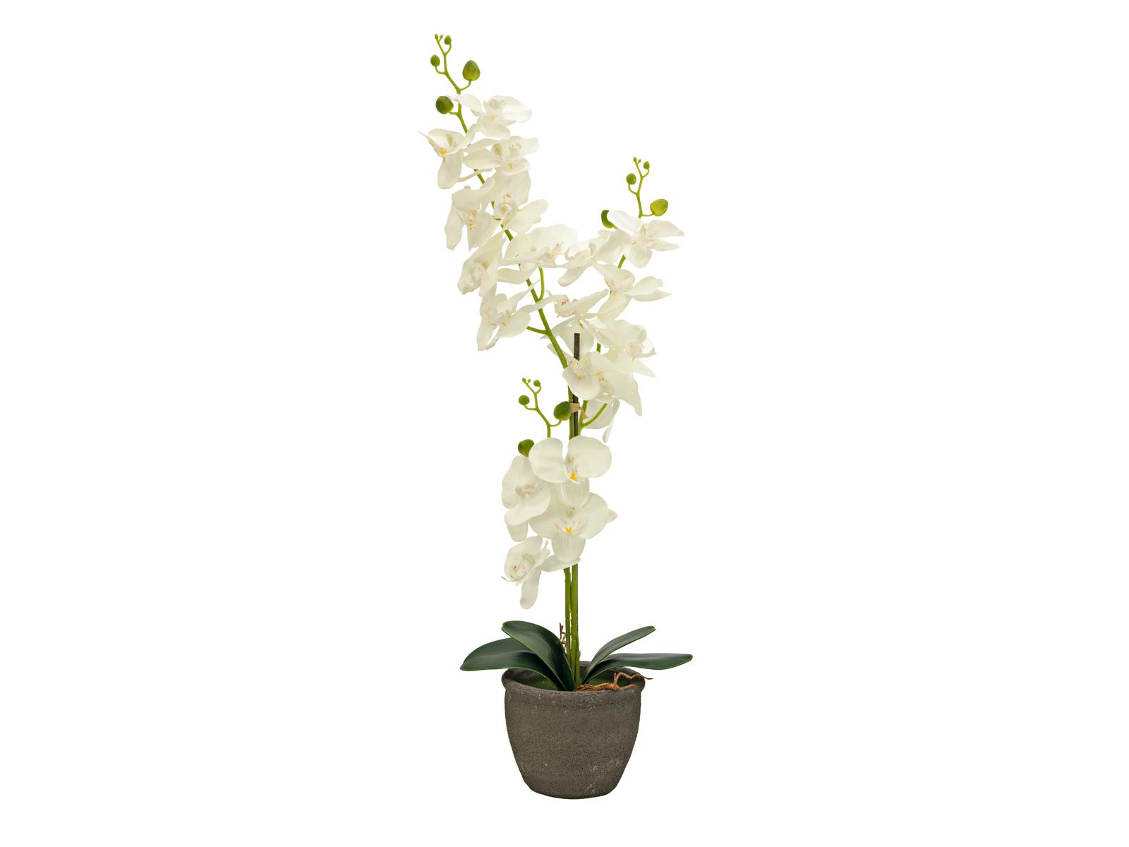europalms-orchidee-kunstpflanze-cremefarben-65cm