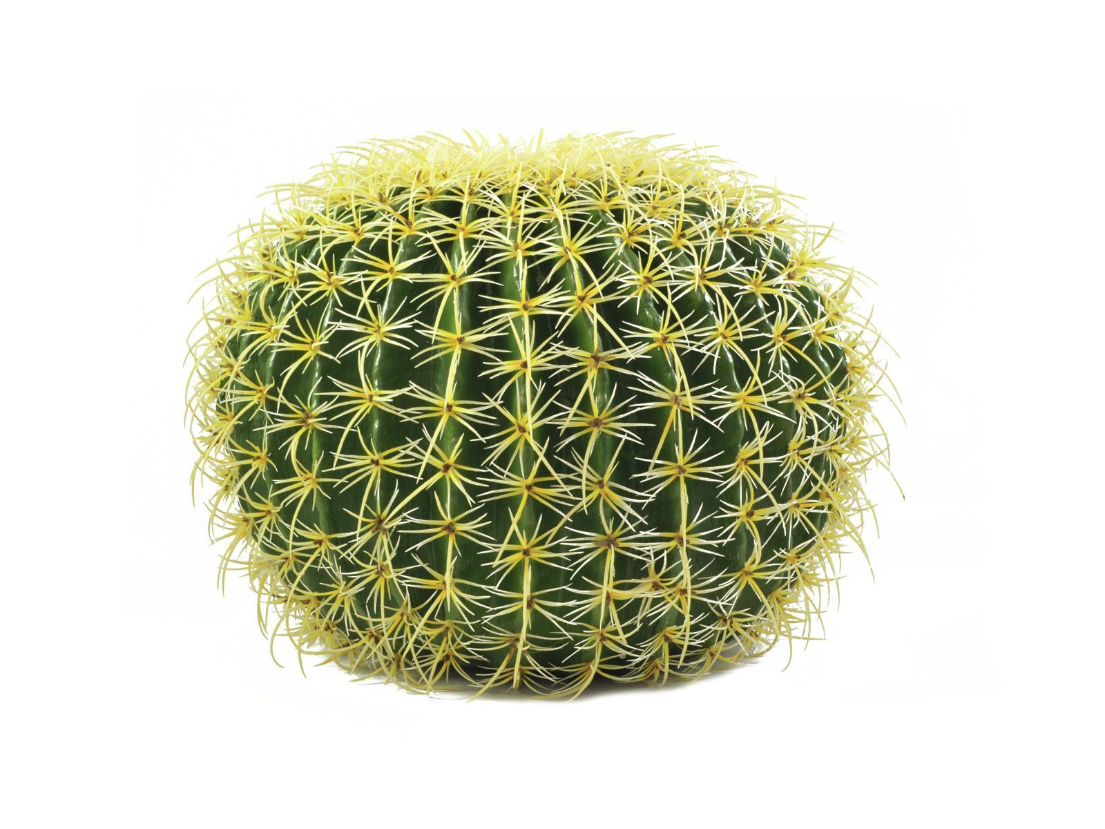 europalms-goldkugelkaktus-37cm-kunststoffpflanze